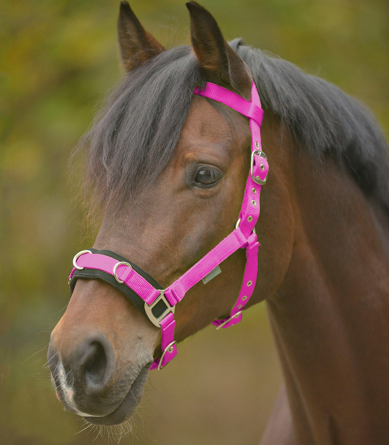 Růžový lonžovací obnosek Waldhausen - pony